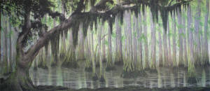 Swamp Backdrop