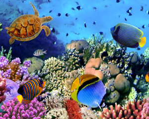 Underwater Coral Reef Pop-Up Drop Backdrop